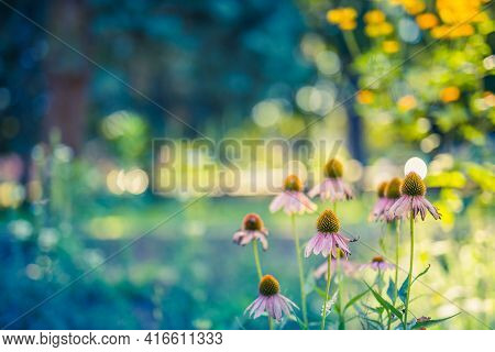 Beautiful Cosmos Flowers Blooming In Garden, Dream Nature Landscape. Relax Tranquil Scenery, Blurred
