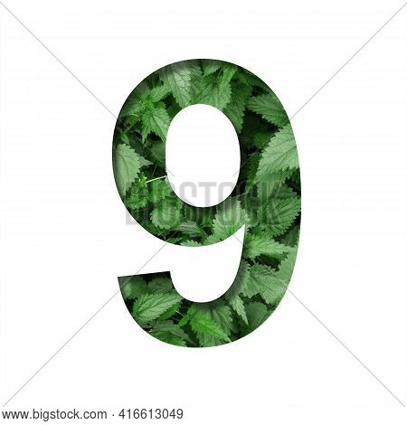 Font Made Of Leaves, Digit Nine, 9, Cut Out Of Paper On A Background Of Natural Green Nettle. Fresh