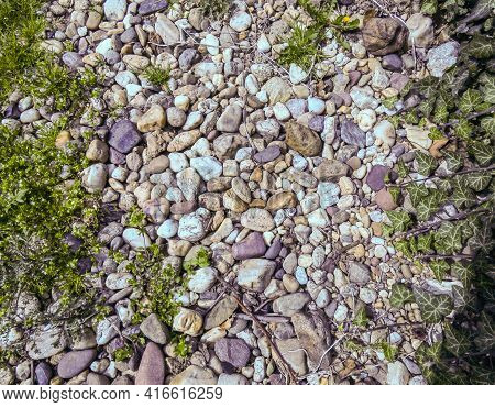 Pebbles And Miniature Plants That Grow From Pebbles