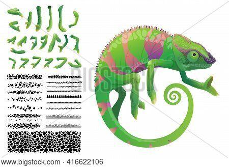 Green Chameleon Lizard Cartoon Vector Tropical Reptile Animal. Chameleon Creation Kit With Construct