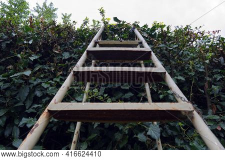A Staircase Resting On A Hedge Symbolizes The Overcoming Of Barriers To Go Into The Unknown. High Qu