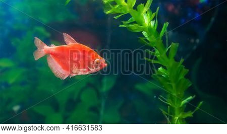 Fish In Aquarium, Aquarium With Fish, Fish Swimming In Aquarium