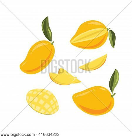 Vector Food Illustration Of Ripe Juicy Mango With Leaves. Cut Into Pieces Slise And Whole Fruit. Han