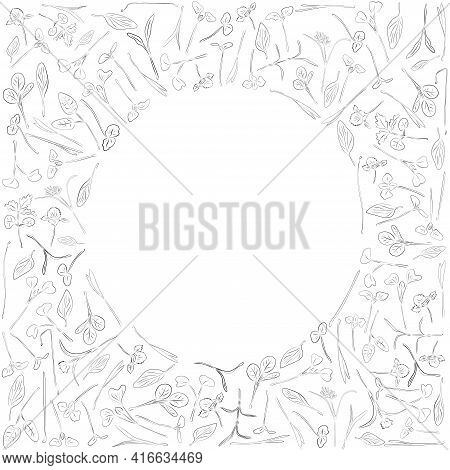 Vector Sketch Round Frame With Microgreen. Herbs - Pea, Sunflower, Onion, Corn, Basil, China Rose, S
