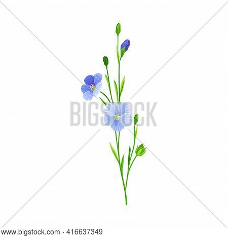 Blue Flax Or Linseed Flowers With Five Petals As Cultivated Flowering Plant Specie Vector Illustrati