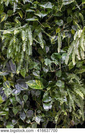 Trend Biophilic Design. Wall From Plants, Vertical Garden,urban Jungle, Modern Interior Decoration.