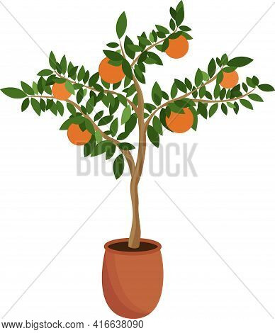 Tangerine Tree In A Pot Isolated On A White Background. Citrus Sapling Grows At Home. Vector Illustr
