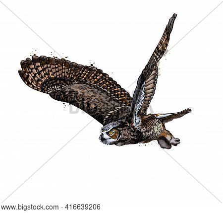 Long-eared Owl, Eagle Owl From A Splash Of Watercolor, Colored Drawing, Realistic. Vector Illustrati