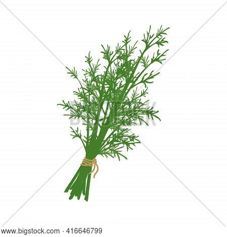 A Bunch Of Dill Herb Tied With A Rope. Source Of Vitamin C. Green Ingredients For Vegetarian Meals A