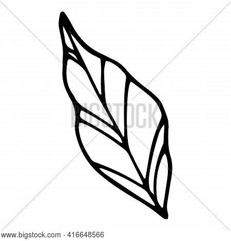 Botany Leaf Icon. Hand Drawn And Outline Illustration Of Botany Leaf Vector Icon For Web Design