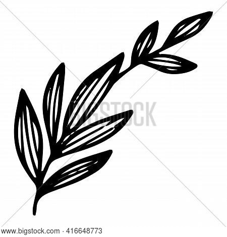 Long Leaf Branch Icon. Hand Drawn And Outline Illustration Of Long Leaf Branch Vector Icon For Web D