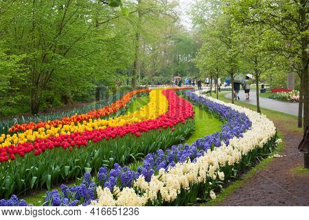 Beautiful Tulips, Background Of Blurry Tulips In A Tulip Flowers Garden