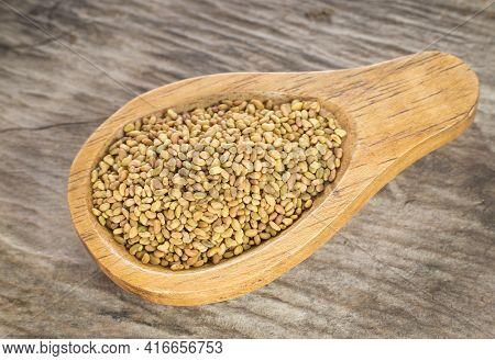 Medicago Sativa - Organic Alfalfa Seeds In Wooden Spoon