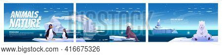 Animals In Nature Cartoon Landing Pages. Wild Penguins, Polar Bear And Seal Sit On Ice Floes In Sea.