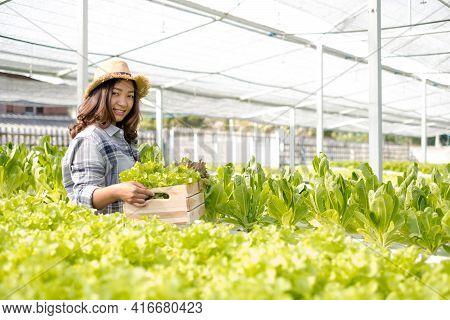 Hydroponics, Asian Woman Farmer Holding Vegetable Baskets Standing On A Farm, Growing Organic, Organ