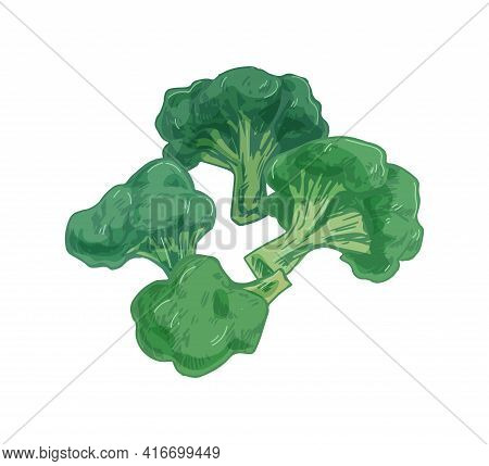 Broccoli With Stalks And Tops. Composition With Brocoli With Lush Heads And Stems. Green Brocolli Ve