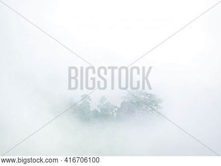 Tropical Rain Forest Forest Covered By  Morning Fog