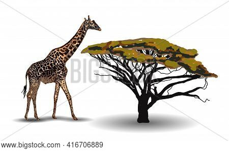 Ethnic Trend. Painting In African Style. Giraffe In The Savannah. African Animal Isolated On White B