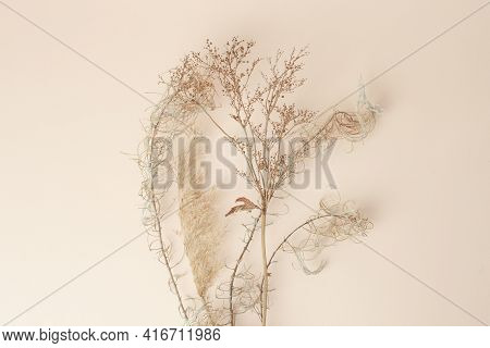 Dry Reeds Isolated On Beige Background. Abstract Dry Grass Flowers, Pile Of Dry Herbs, Hay Or Straw,