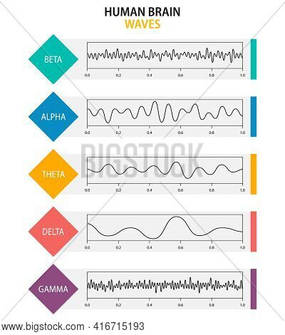 Set Of Brain Waves Oscillation. Beta, Alpha, Theta, Delta, Gamma Brain Waves. Human Rhythm, Types, A