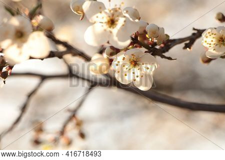 Spring flowers tree branch sunrise Nature flower background flower Nature background Nature flower macro flower sunset flower Nature flower Closeup Nature background flower Nature flower Nature background White flowers Nature flower Nature background.