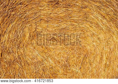 The Texture Of Dry Hay Of Golden Color. Hay During Harvesting.