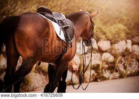 A Chestnut Saddled Horse With A Dark Tail Walks Along The Road With A Rider Who Holds It By The Brid