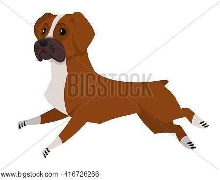 Running Boxer Dog. Beautiful Pet In Cartoon Style.