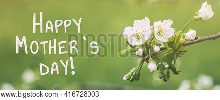 Happy Mothers Day Spring Banner Macro White Flowers Of Apple Tree On A Green Background.