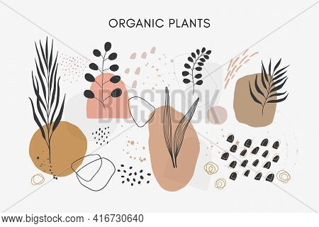 Set Of Vector Hand Drawn Abstract Leaves And Plants With Textures And Shapes.