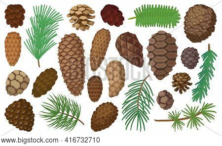 Cone Pine Isolated Cartoon Set Icon. Vector Illustration Spruce Pinecone On White Background. Vector