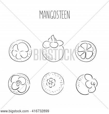 Set Of Hand Drawn Black Line Ink Mangosteen Tropical Fruit. Fresh Organic Food. Vector Illustration