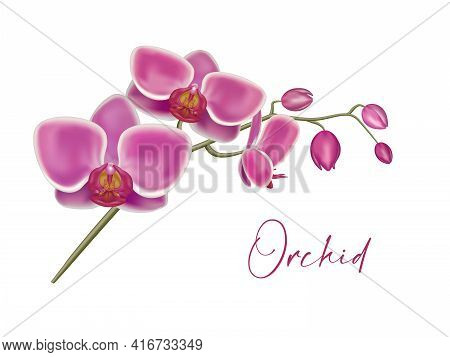 Purple Orchid. Orchid Flowers Set On The White, Vector Illustration. Realistic Detailed 3d Flower Or