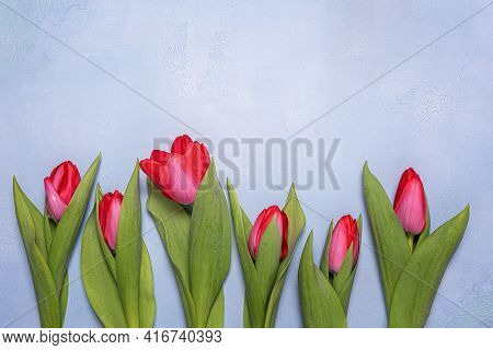 Few Bright Red And Pink Tulip Flowers With Green Leaves On Blue Textured Concrete. Seasonal Backgrou