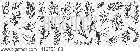 Leaves Natural Pattern Doodle Set. Collection Of Hand Drawn Various Branches With Leaves Of Natural