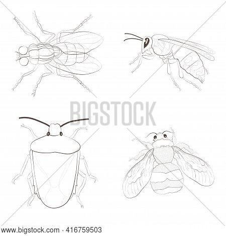 Set With Insects Isolated On White Background. Bumblebee, Crum, Hornet And Housefly.  Element For De