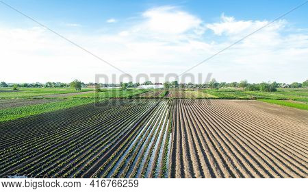 Countryside View Of A Field Half-planted With Eggplant. Well Watering System. Growing Food. Abundant