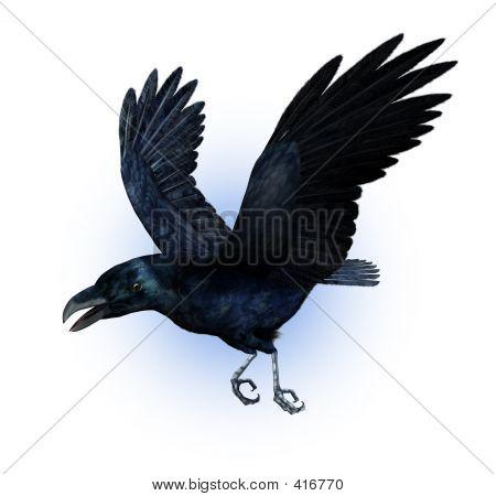Raven Flying