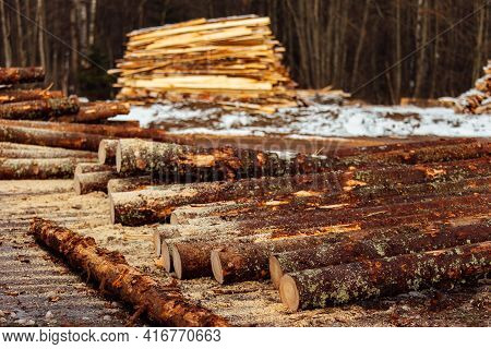 The Texture Of Many Tree Trunks. The Sawn-down Tree Trunks Are Stored In The Warehouse Of An Industr