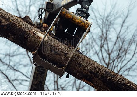 Cargo, Claw, Crane, Cut, Deforestation, Delivery, Ecology, Energy Resources, Environment, Equipment,