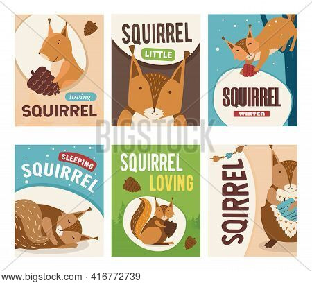 Trendy Poster Desings With Cute Squirrel Character. Orange Or Brown Mammal Sleeping, Holding Nut, Wi