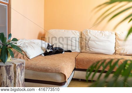 Cozy Home Interior For Relaxation With Black Cat Lying On Large Corner Sofa, Green House Plants And