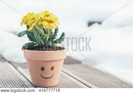 Home Flower,plant Yellow Primrose,primula In Ceramic Pot On Bench In Park.spring Is Coming.goodbye W