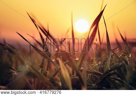 Sunset On A Grass Field, Where An Orange Ball Passes Through Individual Blades Of Grass. The Magical