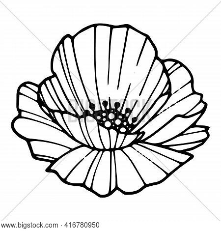 Forest Poppy Icon. Hand Drawn And Outline Illustration Of Forest Poppy Vector Icon For Web Design