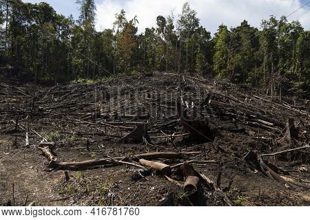 Tropical Rainforest, Burned, Felled And Destroyed, For Timber Extraction, Livestock And Monocultures