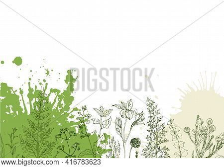 Herbs Flowers Vector Color Line. Space For Text. Template With A Sketch Of Herbs.
