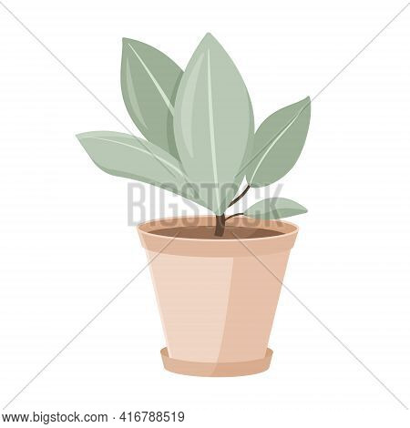 Vector Isolated Illustration On White Background. Cartoon House Plant In A Clay Pot. Growing Ficus.