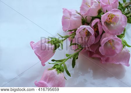 Bouquet Of Campanula Champion Pink, Canterbury Bells, Or Bellflower On White Background. Close-up Of