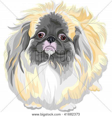 Vector Pedigreed Dog Sable Pekingese Breed